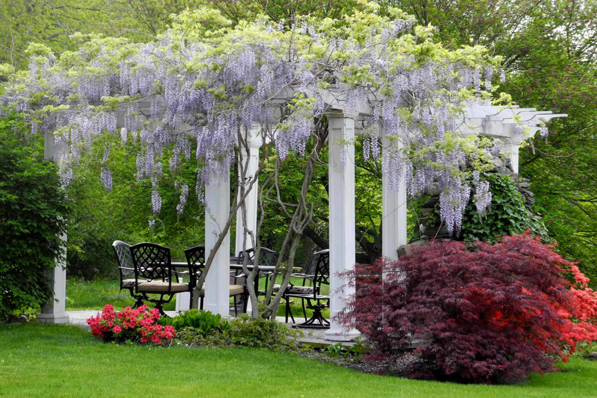 Pergola plants guide shade and enhance your outdoor space for Jardin plante